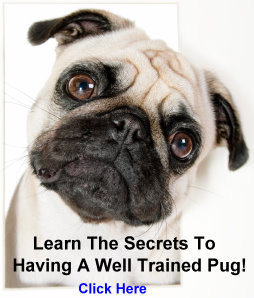 Well Trained Pug Link