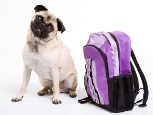 PugsWithBackPack