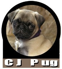 Pug names pug names can tell people a little bit about your friend thecheapjerseys Image collections